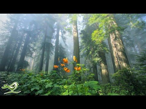 Piękna relaksująca muzyka • Spokojna muzyka fortepianowa i gitara | Sunny Mornings